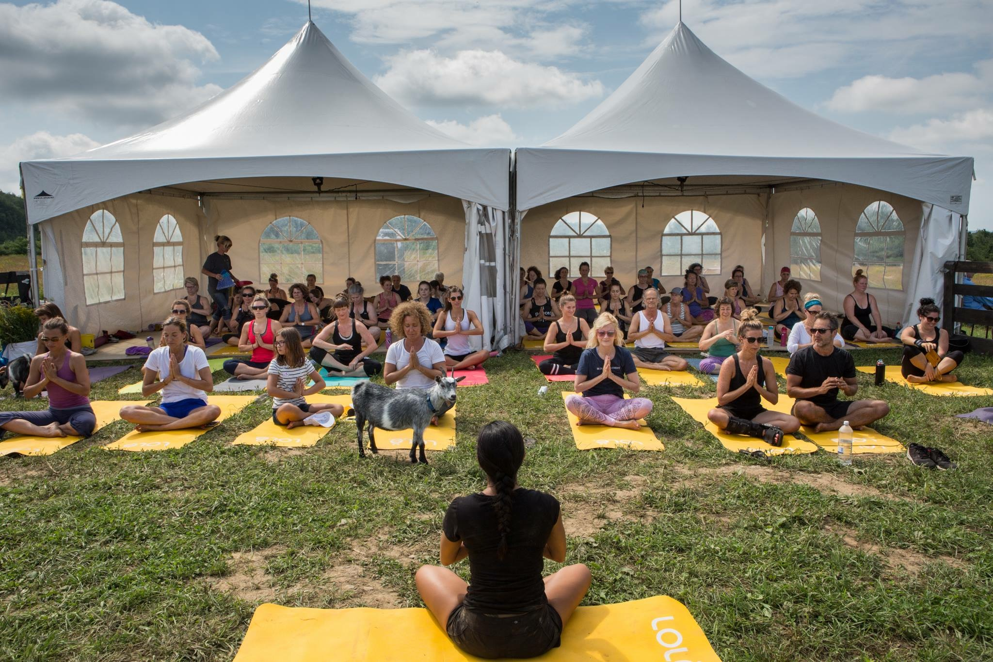 Free yoga, picnic on the grass, what more could you ask for?